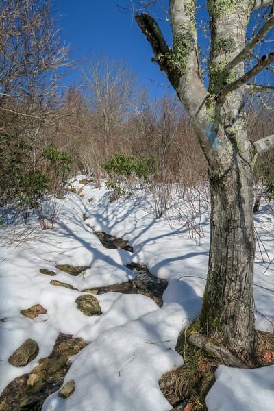 Sam Knob Trail -- 5,500'