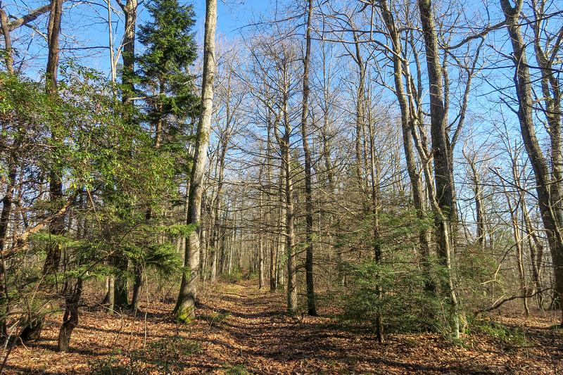 Case Camp Ridge Trail -- 4,100'