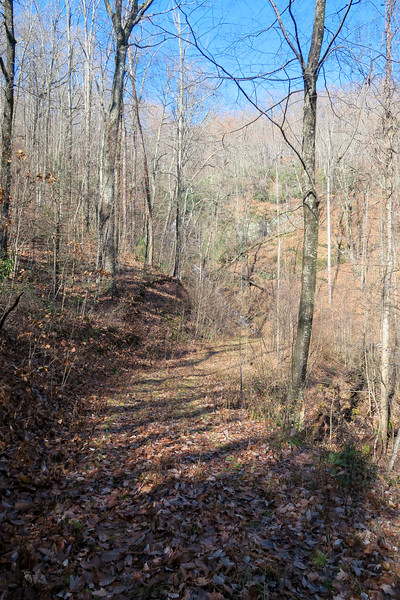 Seniard Ridge Trail/F.R. 5043 @ South Tributary Log Hollow Branch -- 3,240'