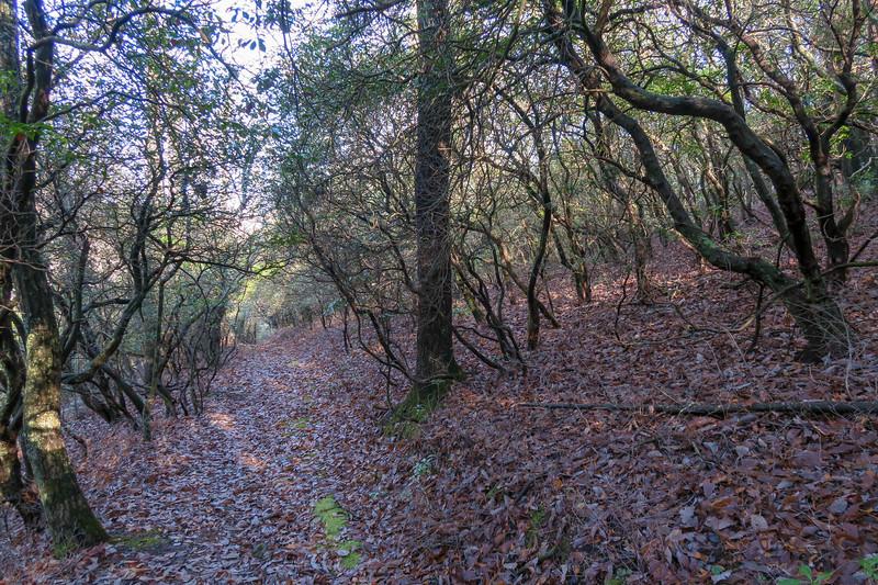 Case Camp Ridge Trail -- 3,550'