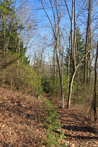 Case Camp Ridge Trail -- 4,200'