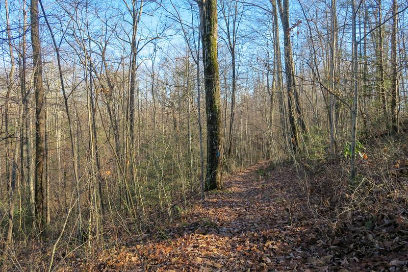 Case Camp Ridge Trail -- 3,480'