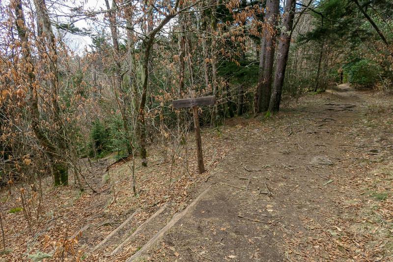 Shining Creek-Art Loeb Trail Junction -- 5,760'