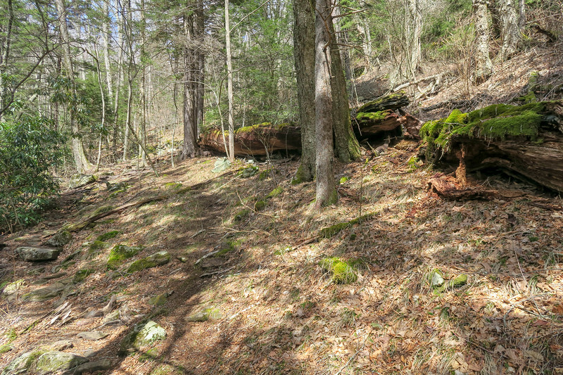 Shining Creek Trail -- 5,080'