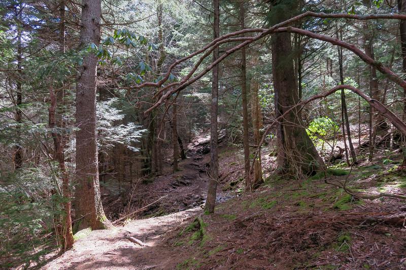 Shining Creek Trail -- 5,600'