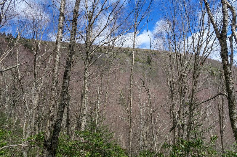 Shining Creek Trail -- 5,420'