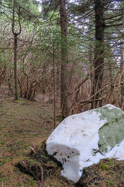 Old Butt Knob Trail -- 5,830'