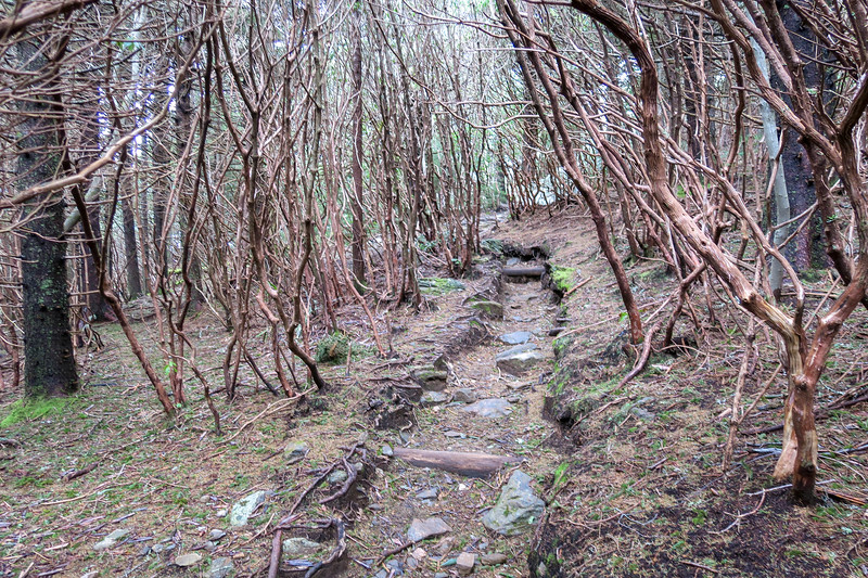 Old Butt Knob Trail -- 5,810'
