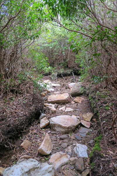 Old Butt Knob Trail -- 5,860'