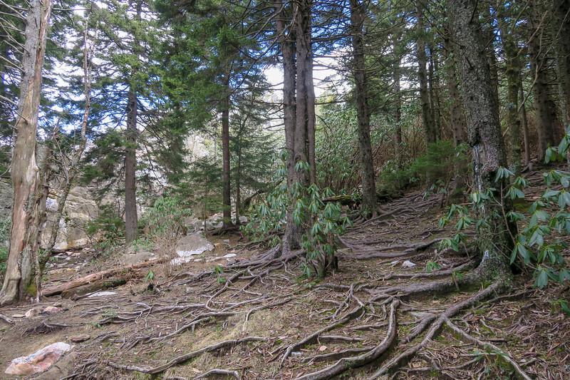 Old Butt Knob Trail -- 5,840'