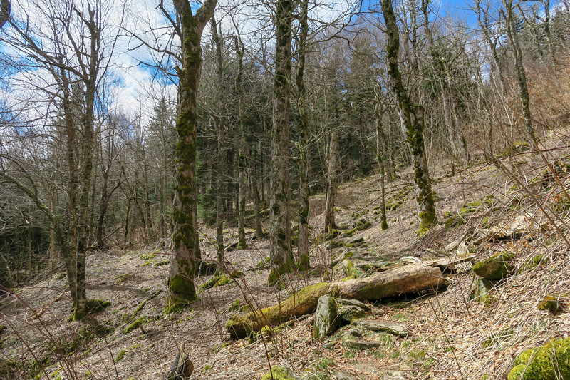 Shining Creek Trail -- 5,500'