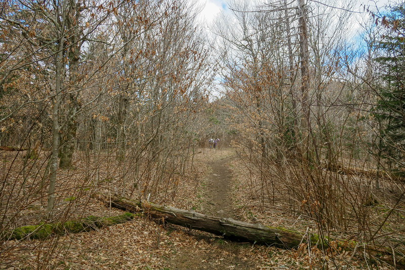 Art Loeb Trail -- 5,770'