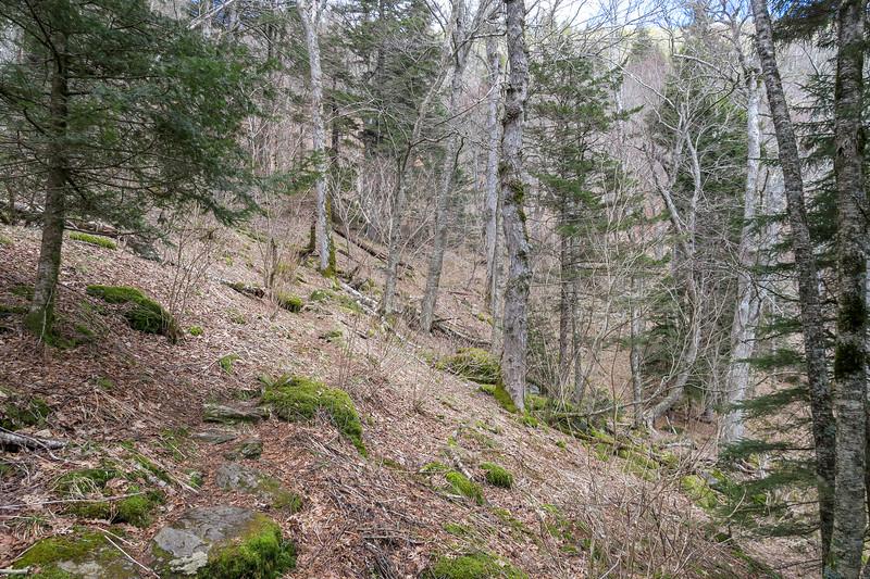 Shining Creek Trail -- 5,480'