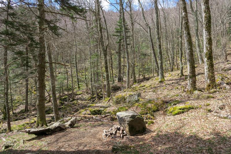 Shining Creek Trail -- 5,260'