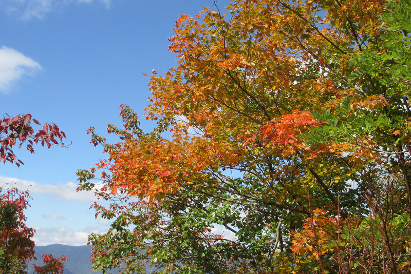 I miss the colors of the maple from up north, they are far and few between down here...  (5,700')