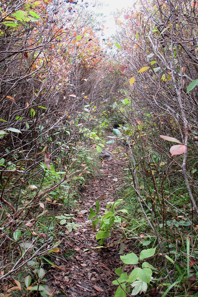 The path to the summit area is absolutely choked with dense shrubs...  (6,000')