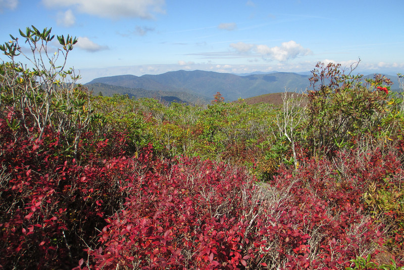 Fall foliage in a heath bald community...the reds of the huckleberry bushes compliment the evergreens of the rhododendron and laurel...  (5,940')
