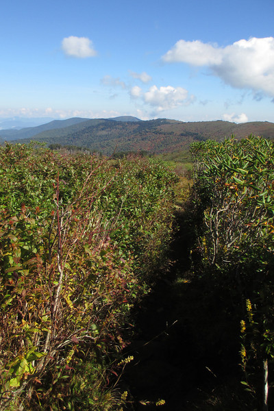 Art Loeb Trail -- 5,950'
