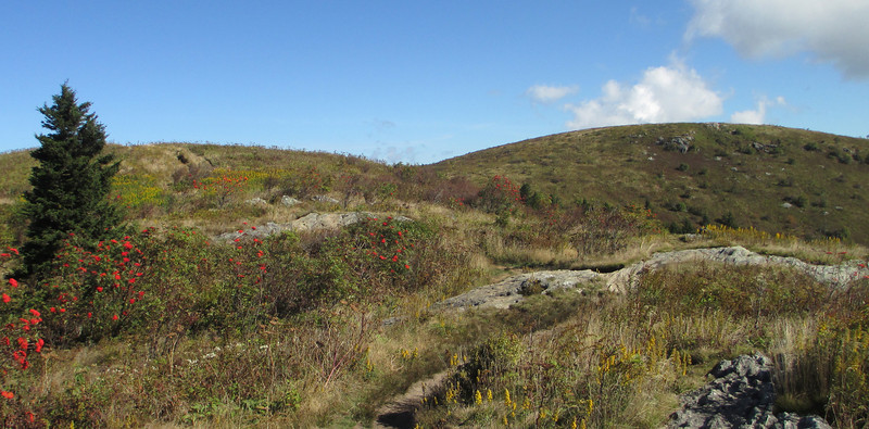 Black Balsam looms a short distance ahead as I top out on one of the rocky knobs about a quarter mile in...  (6,050')
