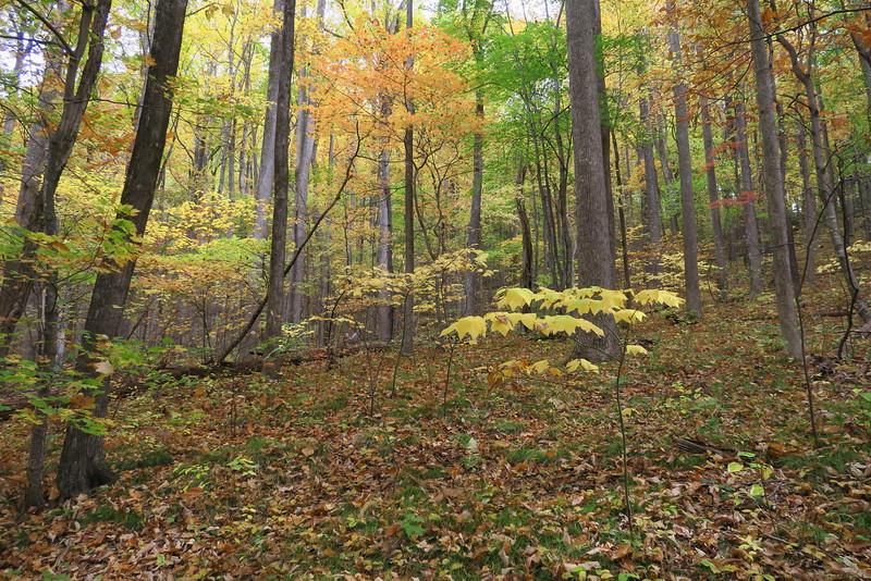 Daniel Ridge Loop Trail - 3,300'