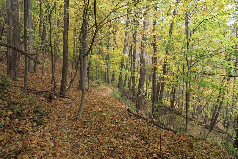 Farlow Gap Trail - 3,600'