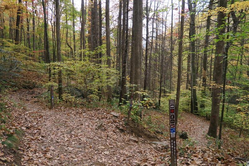 Farlow Gap-Daniel Ridge Loop Trail Junction - 3,180'