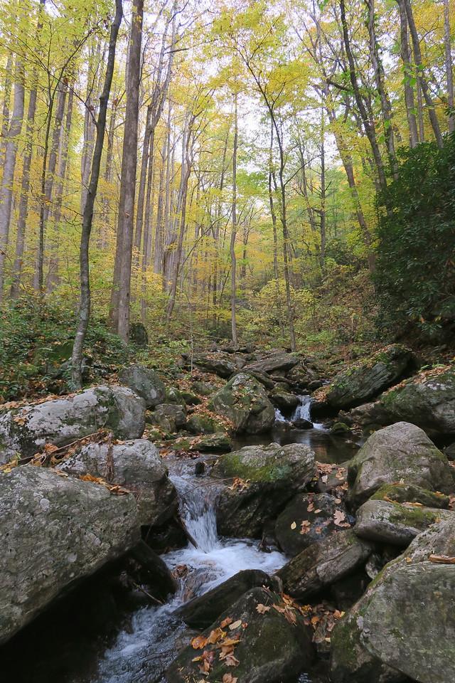 Right Fork Daniel Ridge Creek - 3,200'