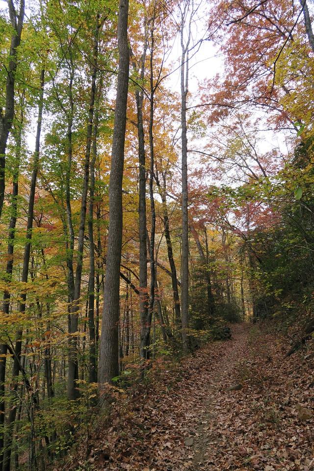 Daniel Ridge Loop Trail - 2,750'