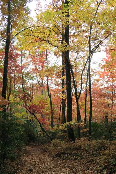 Daniel Ridge Loop Trail - 3,380'