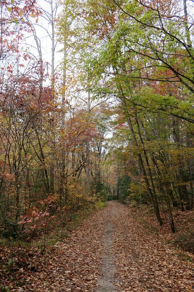 Daniel Ridge Loop Trail - 2,640'