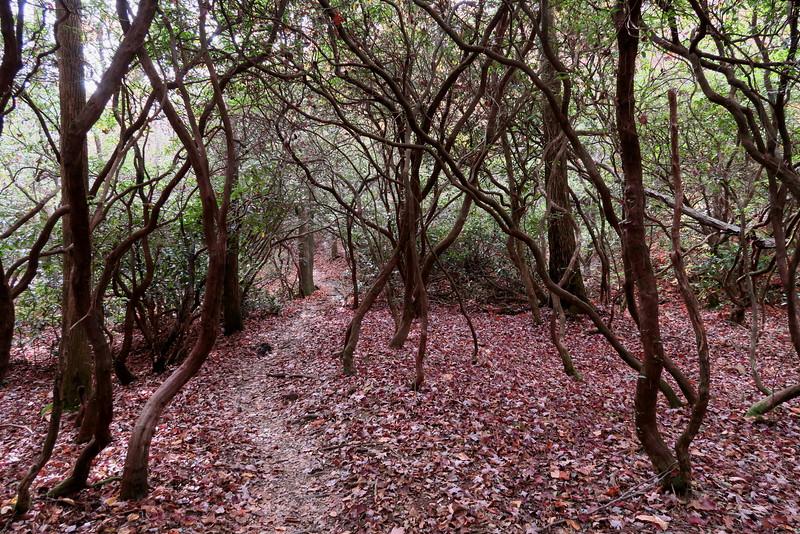 Daniel Ridge Loop Trail - 3,000'