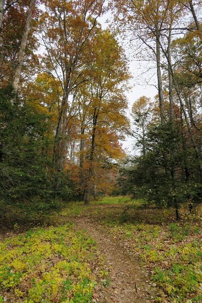 Daniel Ridge Loop Trail - 3,100'