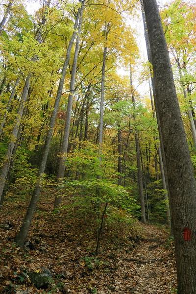 Daniel Ridge Loop Trail - 3,220'