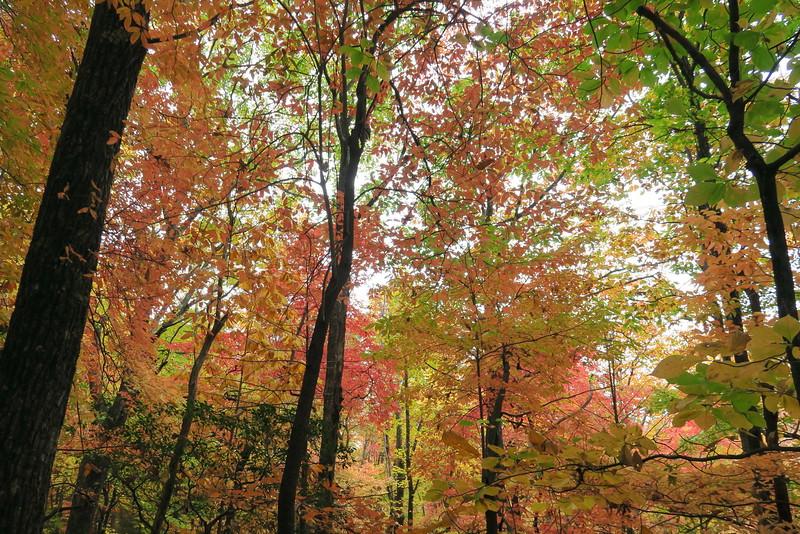 Daniel Ridge Loop Trail - 3,340'