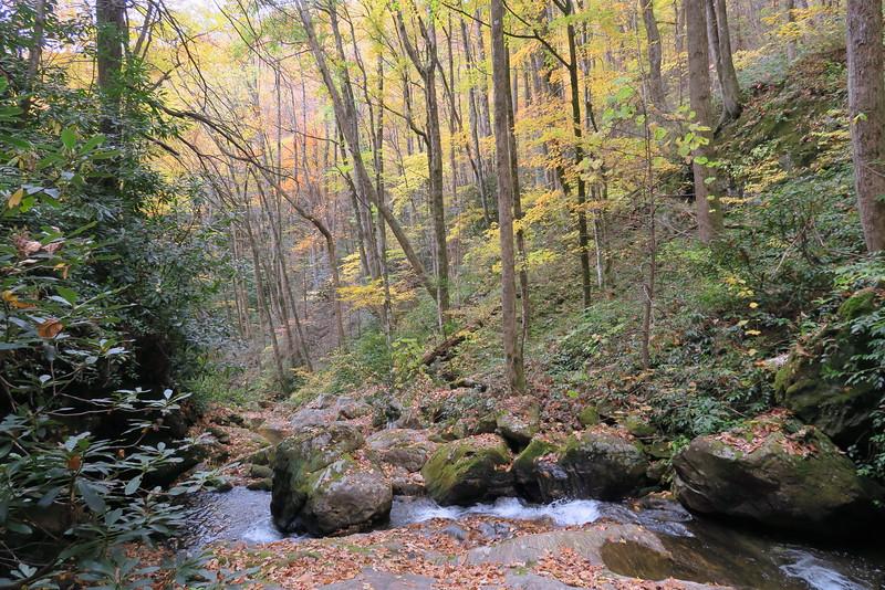 Shuck Ridge Creek - 3,520'