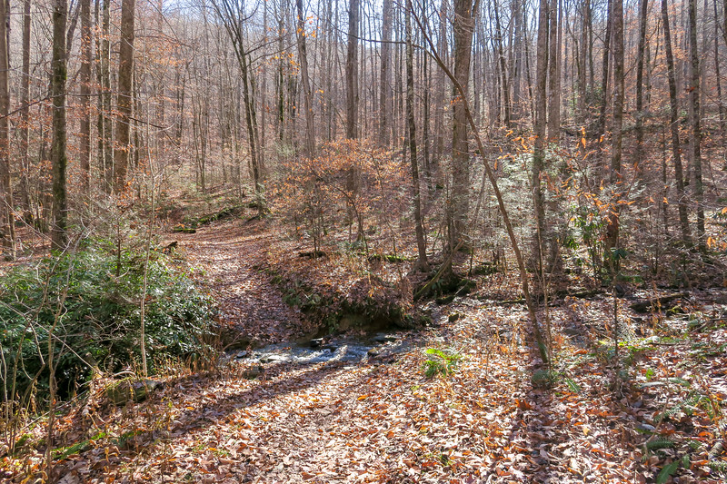 South Mills River Trail (Cove #8) -- 3,060'