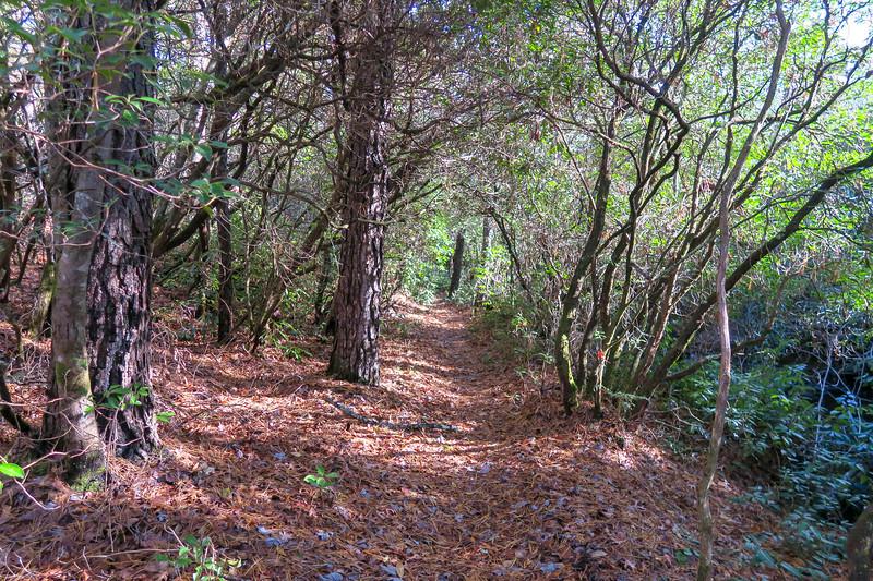 Gauging Station Trail -- 3,170'