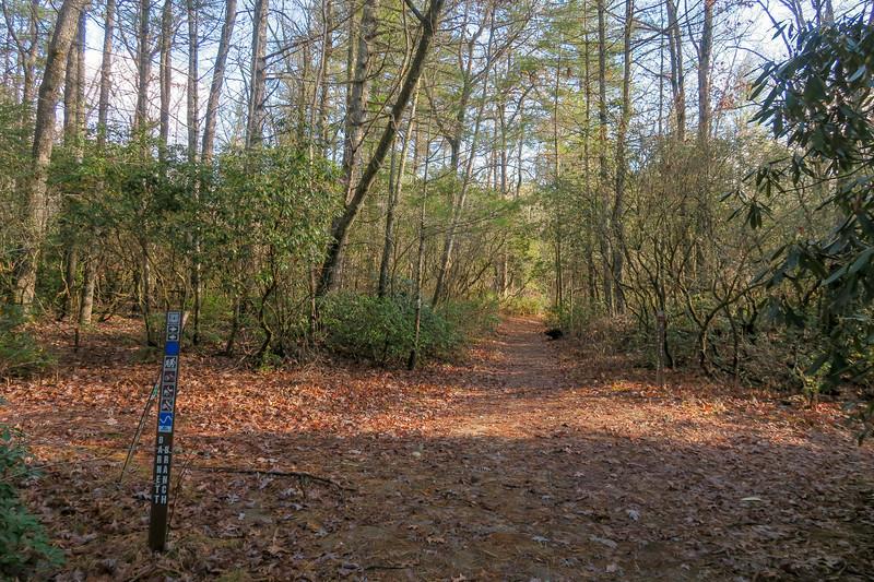 Pink Beds Loop/Barnett Branch Trail Junction -- 3,210'
