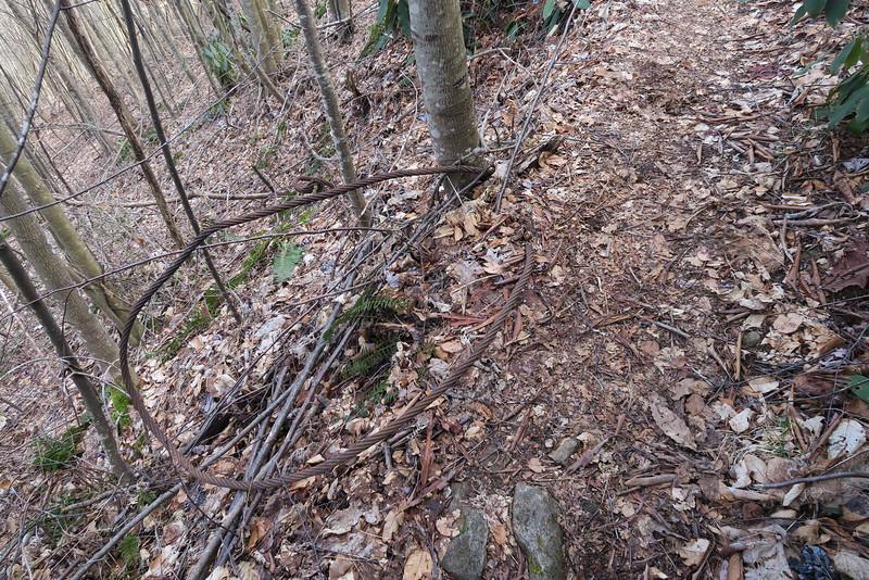 Summey Cove Trail - 3,480'