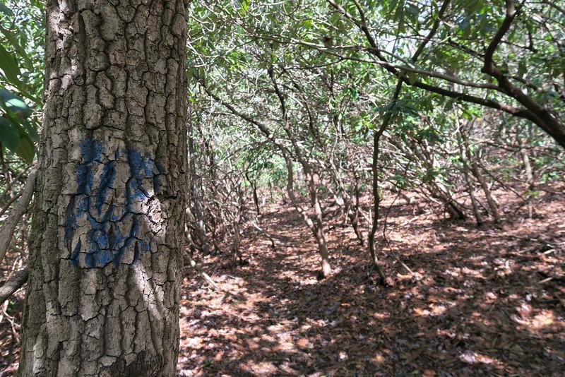 Summey Cove Trail - 3,280'