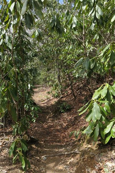 Summey Cove Trail - 3,270'