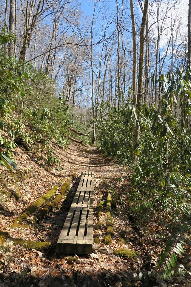 Summey Cove Trail - 3,420'