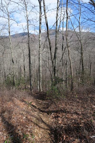 Summey Cove Trail - 3,560'