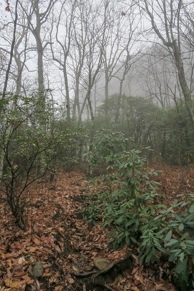 Sunwall Trail -- 3,450'