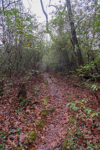 Sunwall Trail -- 3,120'