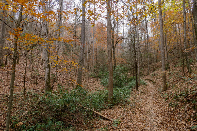 Sycamore Cove Trail -- 2,320'