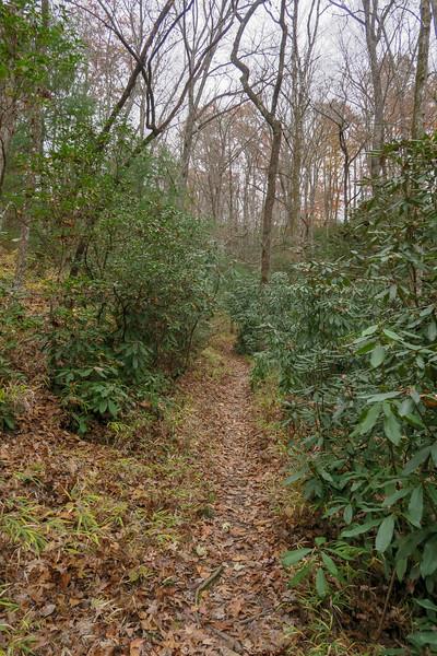 Sycamore Cove Trail -- 2,580'