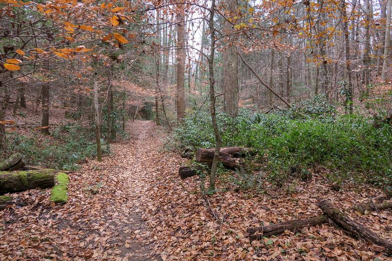 Sycamore Cove Trail -- 2,220'