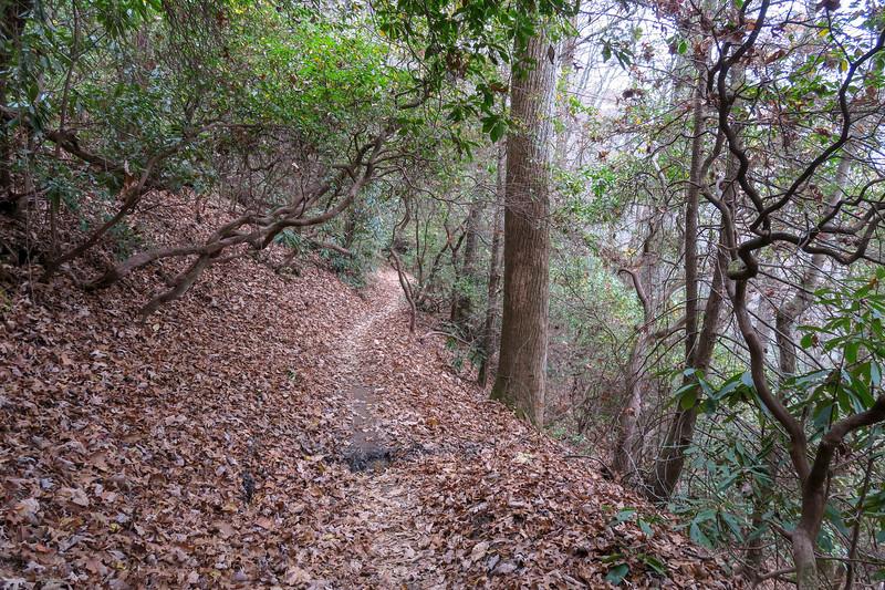 Sycamore Cove Trail -- 2,550'