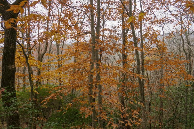 Sycamore Cove Trail -- 2,720'